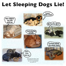 sleepingdogslie design image